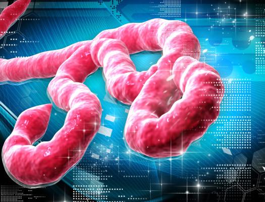 http://www.dreamstime.com/royalty-free-stock-photo-ebola-virus-image37694615